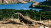 科莫多国家公园,生活着恐龙时代的生物,参观需要当地人陪同保护