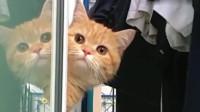 橘猫:我一点都不胖,我每天的食物都是一定的量