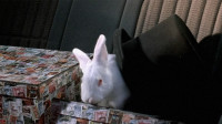 高科技遥控,能将人变成丧尸,还能把丧尸变成兔子!