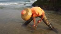 大退潮后,赶海小哥来海边捡漏,这里的生蚝又多又肥,忍不住生吃了一个