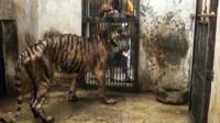 """最""""残忍""""的动物园,究竟有多""""残忍""""?镜头拍下""""残忍""""一幕!"""