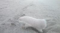 在野外碰到一只粉色的奇怪生物,刚想伸手捡起来,就被制止了!