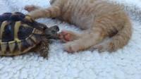 乌龟趁猫咪睡觉,一口咬向猫咪的爪子,下一秒,主人差点笑岔气!