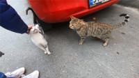 流浪猫见小伙撸其他猫,在一旁乖乖等待,真是太懂事了