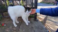一只颜值很高的流浪猫,见人就撒娇:求求你带我回家吧