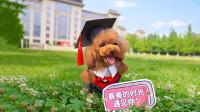 毕业那年的夏天你还记得吗?主人带狗狗重走校园路,致我们的青春!
