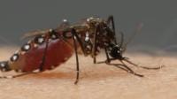 为什么蚊子就算被拍死,也要吸血,看完长知识了