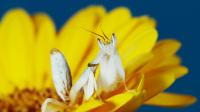 美的不舍眨眼震撼视觉短片《昆虫的起义》