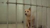 广州将修订养犬条例  防止流浪犬泛滥 珠江新闻眼 20190620