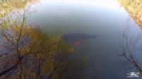 丽江黑龙潭公园:在潭里发现一条好大的鱼,大家知道这是什么鱼吗