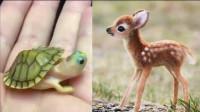 [萌宠来袭]任何动物小时候都很可爱呆萌的啦,就跟你小时候一样!