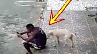 狗狗悄悄的走向男子身后,突然抬腿,下一秒你们憋住别笑!