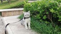 如何才能做出猫主子爱吃的自制猫粮?