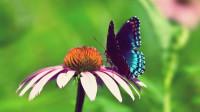 12星座最像哪种昆虫?我是小蝴蝶!