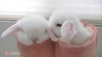 小兔子这么可爱怎么能吃它?小时候下不了手,长大后总可以了吧