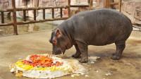 男子给猪过生日,有蛋糕有蜡烛,还唱生日歌,笑得我肚子疼!