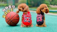 小学生教2只狗狗打篮球,没想到汪星人百发百中!