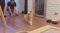 猫咪爱上了在地板上摩擦,主人很乐意陪伴