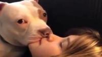 为什么现在的女生都喜欢养狗,难道有什么小秘密吗?原来如此