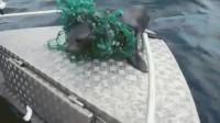 幼崽的海狮脖子上挂着一大块的渔网,得到自由之后,做这样的动作