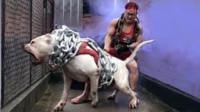 全球战斗力最强的世界第一猛犬,比狮虎豹更凶残,看完心服口服