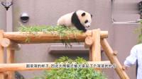 """大熊猫饿得""""皮包骨"""",游客纷纷指责动物园:俺家国宝就这待遇?"""
