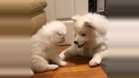 母亲狗和可爱的小狗视频