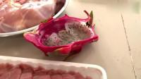生牛肉片与大鸡腿让两只比特犬吃得非常过瘾,火龙果解腻