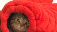 这猫真是越来越会玩了,躲在主人棉裤里,被发现后还面无表情!