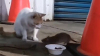 阿喵你的尊严呢?你还是只猫吗?   阿喵:我怕!