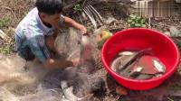印度小伙的网撒得又大又圆,清道夫、罗非鱼、鲫鱼、鲶鱼全都有!