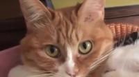 猫咪:嘘,我媳妇睡着了,你不要出声!