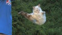 猫咪为什么摔不死?不是因为有9条命,来看一下放慢10倍下的镜头