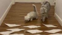 猫咪克星~粘毛纸!不听话,来一帖吧!  最近在筹备孙球球猫咪工作室~敬请期待吧