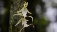 全球最贵的花,一朵高达1500万元,或许就在你身边!