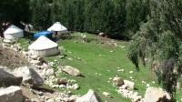 【玩遍全世界】走遍北疆,路上看到有意思的阿勒泰羊,屁股特别大
