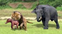 大象救子心切,鼻子一甩霸气十足,镜头拍下全过程