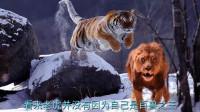 为了考验老虎的忠诚度,男子把手放进虎口,没想到意外的事情发生了!