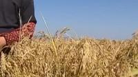 种地如何能多挣钱,这是每个农民的问题,这大哥办法实现了多挣钱