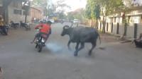 又开挂了!小伙在公牛面前轰油门,激怒公牛追赶自己