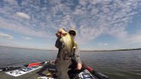 钓鱼比赛中捕获的巨型鲈鱼