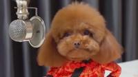 咕噜的娱乐小花园:穿衣服小狗狗的搞笑视频,你知道么?