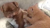 咕噜的娱乐小花园:好感情小狗狗的搞笑视频,你知道么?