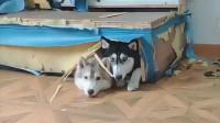 咕噜的娱乐小花园:六亲不认步伐小狗狗的搞笑视频,你知道么?