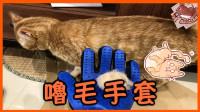 【巧克力】『橘子冰的日常』- 超好用的貓咪嚕毛手套!