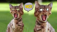 高冷猫咪范二卖蠢成这样,你还是我认识的喵星人吗?