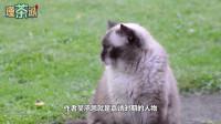 《西游记》里为何没有猫妖?真是不敢写吗?专家说出原因,看完长知识了!