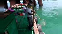 海上野钓遇到金鲳鱼群,连杆上鱼的感觉真不错