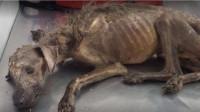 流浪狗饿到只剩一副骨架,被男子好心收养,3个月后全家人傻眼了