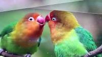 """鹦鹉变身""""心机鸟""""独得主人恩宠,想要跟鹦鹉争宠让你输的心服口服"""